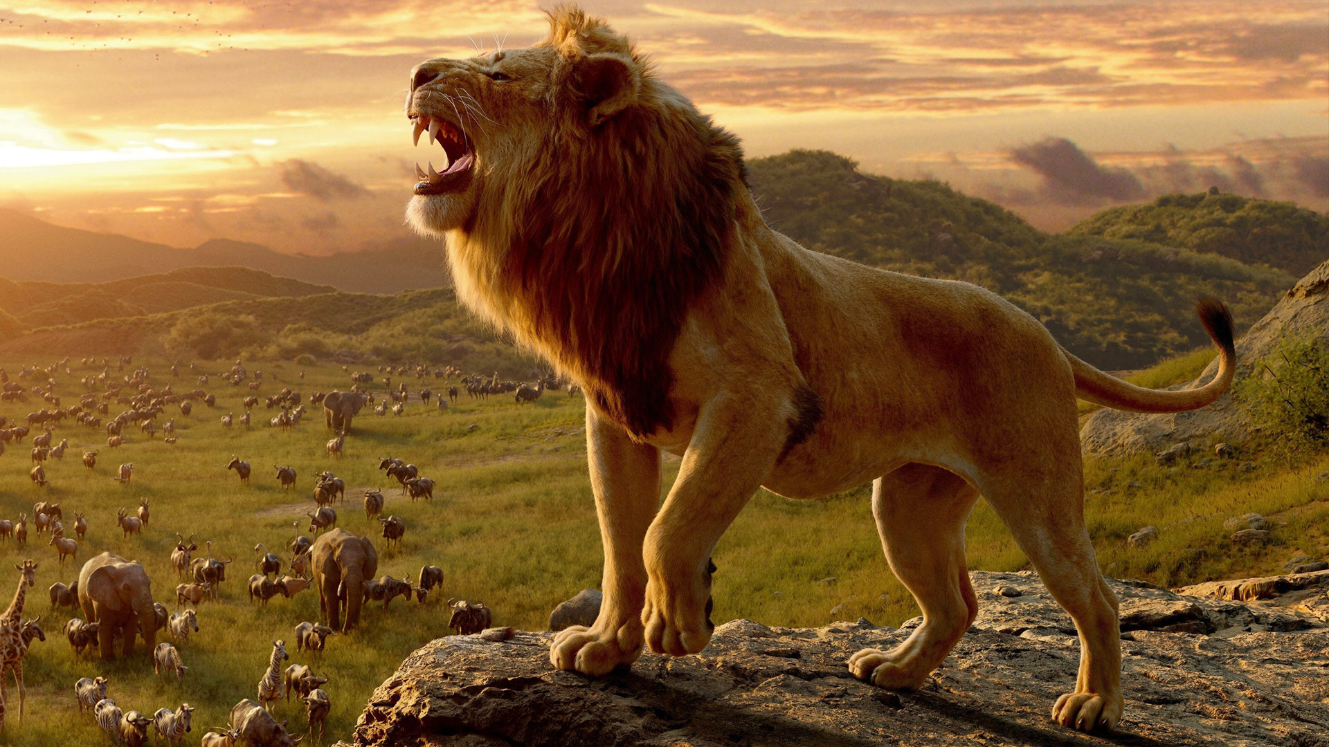 Image result for the lion king 2019 movie pictures